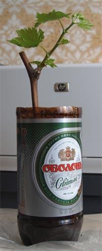 http://vpvine.narod.ru/picts/oneeye3.jpg